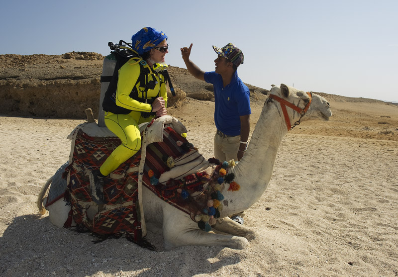 Camel-diver1.jpg