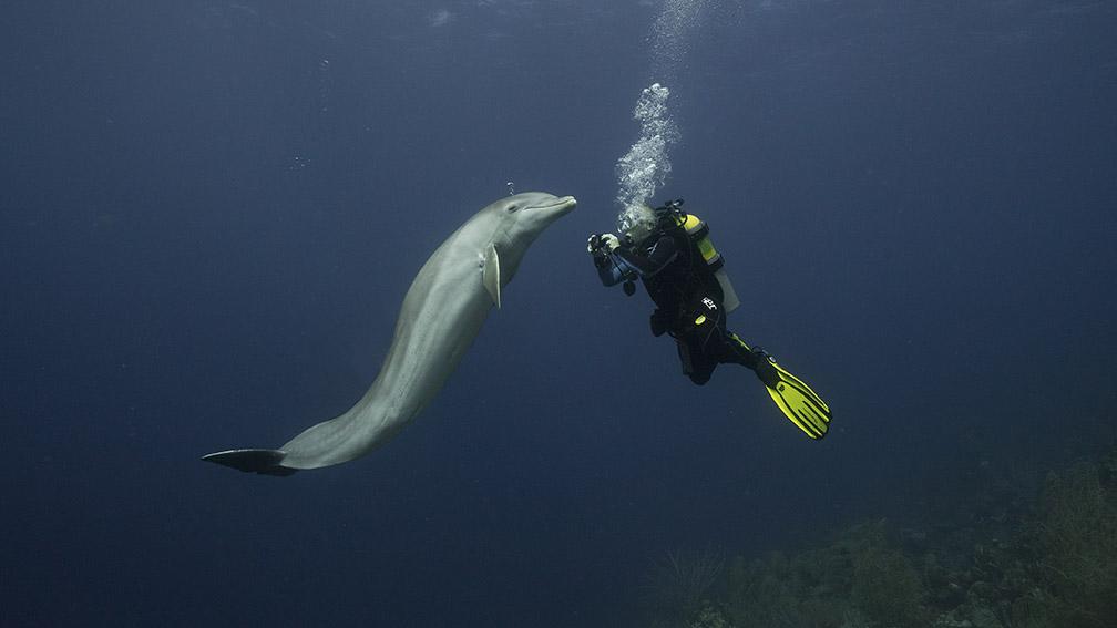 Dolphin-meetup.jpg